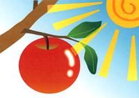 「赤い実」と食物繊維2